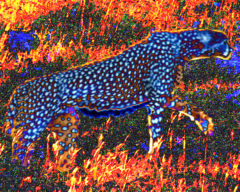 FIRE SPIRIT - A mysterious dark cheetah stalks through a fiery looking landscape in red, yellow and orange